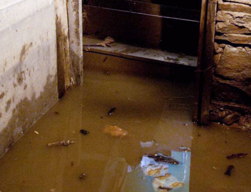 3 Gross Things Founds in Floodwater